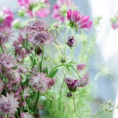 flower_potluck_5